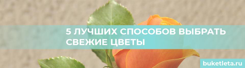 Способы выбрать цветы
