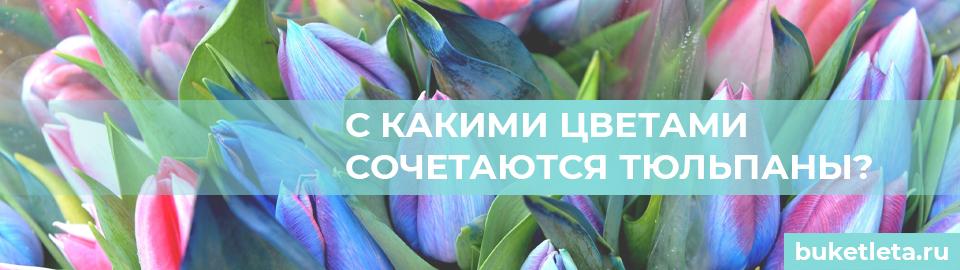 С чем сочетаются тюльпаны