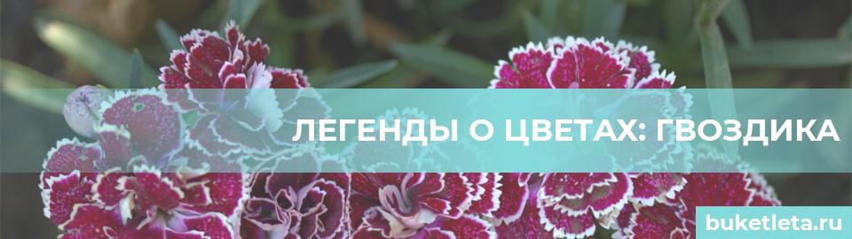 Легенды о цветах гвоздика