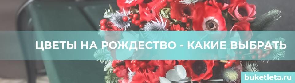 Цветы на рождество
